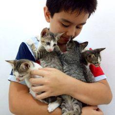 Criança cria abrigo para animais