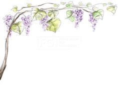 페인터오브젝트, 프리진, 일러스트, 식물, 여름, 과일, 나뭇잎, 나무, 포도나무, 포도, 열매, 배경, 자연, 오브젝트, 에프지아이, 페인터, 라인, 스케치, 덩쿨, 음식, 나뭇가지, 나무가지,#유토이미지