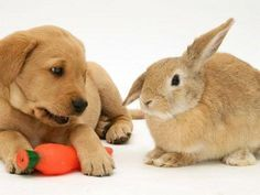 How 'bout a squeaky carrot for your Bestie?