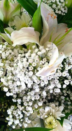 "I think these white little flowers so beautiful! Here in Brazil is called ""Carioquinhas."" A bouquet of them is just beautiful. Rejoice the home and brings peace!!"