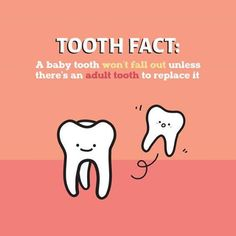 Did you know that a baby tooth won't fall out unless there's an adult tooth to replace it?
