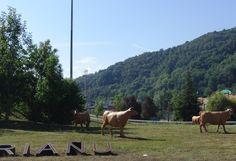 Rotonda de las vacas (Riaño)