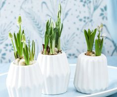 Tyvstart foråret - nyt indlæg på bloggen. #løgvækster #småvaser #blomstermix