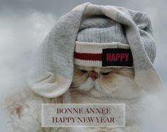 Bonne année 2017 ! Happy new year 2017 ! 🎉 #BonneAnnee #newyear #cat