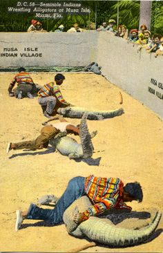 Seminole Indians Wrestling Alligators At Musa Isle, Miami, Fla-57835