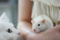 rats <3 soft focus and monochromatic photography.