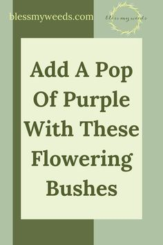 Surround yourself with greenery with help from blessmyweeds.com. Find out what plants are best for you. Get started growing unique purple flowering bushes with these fun ideas. Purple Flowering Bush, Flowering Bushes, Lilac Bushes, Wisteria Plant, Sore Eyes, Purple Orchids, Exotic Plants, Fun Ideas, Shrubs