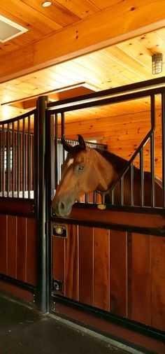 Horse Ranch, Stables, Horses, Animals, Animales, Horse Stables, Animaux, Run In Shed, Animal