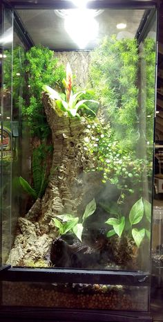 "Zoo Med Skyscraper Terrarium. 18""x18""x36"" Tropical Setup. DIY this terrarium with our Waterfall Kit, Eco Earth, Cork Rounds, our Natural Bush Vine Plants, and your favorite live plants."