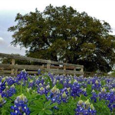 I Luv Texas