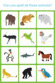 Kids learn the names of different animals as well as learn how to spell animal names. Visit us at apps.eddypaddy.com