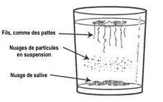LISTE ALIMENTS ANTI MYCOSES +!Test maison pour détecter le candida albicans dans le corps