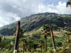 On instagram by map4_ #landscape #contratahotel (o) http://ift.tt/2pnpX1V alud después del terremoto del 70 tapó todo Yungai. Más de 10mil personas murieron pocas sobrevivieron. Entre las cosas que el alud no mató fueron estas dos palmeras ahora solo troncos.  Yungai sigue llorando la pérdida la razón de cómo llegaron a caer pedazos de roca tam gigantescos sigue siendo desconocido.  #Yungai #historia #history #sad  #palms #rip #city #alud #terremoto #earthquake #documentary #photography…