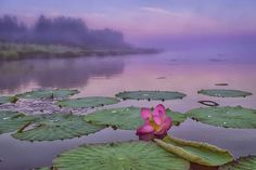 Озеро Лотосов, село Галкино, Хабаровский край