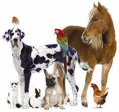 pet-care-supplies.jpg 400×377 pixels