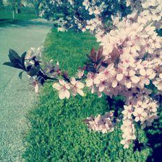 #pinkflowers