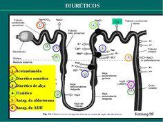 A classe dos diuréticos é uma das mais usadas, estando indicada em várias doenças como hipertensão, insuficiência cardíaca, cirrose hepática e outros que falarei com mais detalhes abaixo. Quais são…