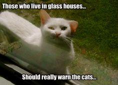 Semi-flat Cat...