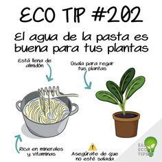 Eco Garden, Green Garden, Plants Are Friends, Terrarium Plants, My Secret Garden, Green Life, Plant Decor, Compost, Gardening Tips