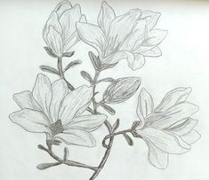Magnolia Leaf Tattoos, Magnolia, Leaves, Drawings, Drawing Flowers, Flower Designs, Magnolias, Sketches, Drawing