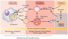 Overview of reverse cholesterol transport by HDL.