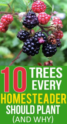 "There is an old saying that goes, ""The best time to plant a tree is 10 years ago."" This holds especially true for trees that someday may save your life in the event of a crisis or disaster. Homestead Gardens, Farm Gardens, Homestead Farm, Homestead Living, Fruit Garden, Edible Garden, Vegetable Garden, Homestead Survival, Survival Skills"