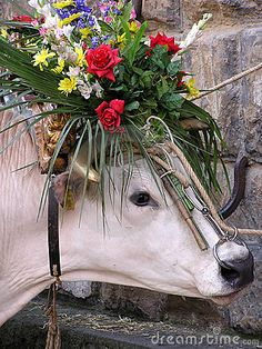 ღღ Decorated German Alps cow if you have a cow, you should definitely do this .. just Saying... Isn't she festive?