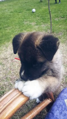 Felix! Cutie puppy....white paws