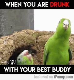 We never got drunk (i hope we won't) but it will be probably like this (I'm the one which stands in the top, headshake! Headshake!) :D