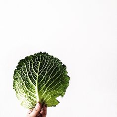 I do play with food Savoy Cabbage, Plant Leaves, Tasty, Seasons, Play, Instagram Posts, Food, Meal, Essen