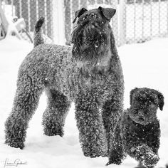 Wire Fox Terrier, Terrier Dogs, Dog Pictures, Animal Pictures, Black Russian Terrier, Pet Breeds, Blues Rock, Schnauzers, Guinness