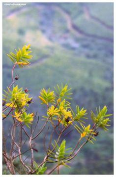 Up The Hill - Munnar by Renjith Vijay on 500px