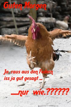 lustiges Bild 'raus aus den Federn    .gif' von Edith. Eine von 14329 Dateien in der Kategorie 'witzige Bilder' auf FUNPOT.