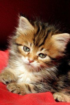 What an adorable #kitten