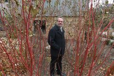 Keith S. Kaiser, executive director of the Pittsburgh Botanic Garden stands among some 'Cardinal' red twig dogwood plants. They are just one of the plants he loves for winter interest in the garden.