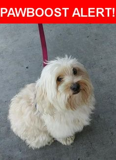 Is this your lost pet? Found in San Jose, CA 95122. Please spread the word so we can find the owner!  White ws Tan  Nearest Address: Near Story Rd & Lucretia Ave