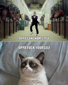 Grumpy Cat: Gangnam