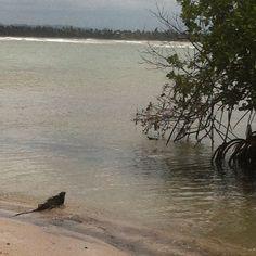 Mi Iguana Amigo de Rio Grande