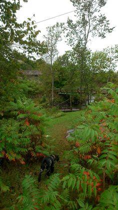Zen, Country Roads, River, Garden, Plants, Garten, Flora, Plant, Lawn And Garden