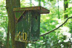 Ilmaisia Kuvia : luonto, haara, kukka, Koti, eläin, vihreä, viidakko, takapiha, puutarha, sulka, lintuja, varpunen, laskuttaa, lintuhuone, lintu syöttölaite, Schwalbe, ulkona rakenne 2816x1880 -  - 1013339 - Ilmainen Kuvapankki - PxHere
