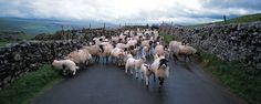 Yorkshire Dales (National Park 15)