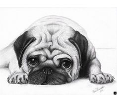pug puppy sketch - G - Pug Puppies Pencil Drawings Of Animals, Animal Sketches, Drawing Sketches, Puppy Drawings, Face Drawings, Face Sketch, Drawing Animals, Cute Pug Puppies, Cute Dogs