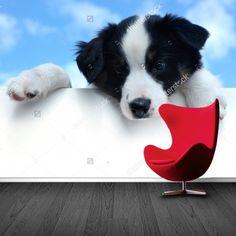 Fotobehang Puppy | Maak het jezelf eenvoudig en bestel fotobehang voorzien van een lijmlaag bij YouPri om zo gemakkelijk jouw woonruimte een nieuwe stijl te geven. Voor het behangen heb je alleen water nodig!   #behang #fotobehang #print #opdruk #afbeelding #diy #behangen #puppy #hond #hondje #huisdier #dier