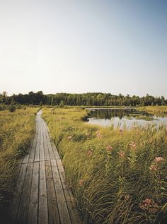 Visit Grass River Natural Area in Bellaire, Michigan
