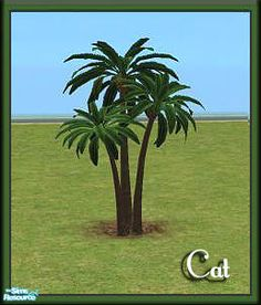 cathee's Palm Group