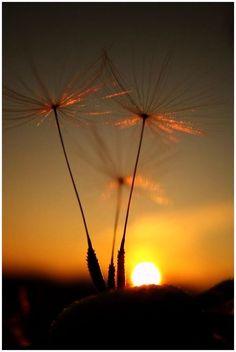 Sonnentanz by *Malleni   # Pin++ for Pinterest #