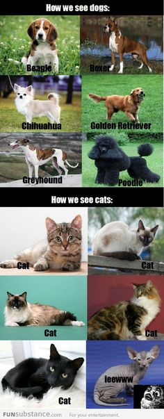 How I see cats and dogs