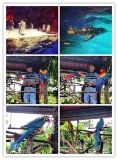 Ocean Park Ocean Park, Aquarium, Goldfish Bowl, Aquarium Fish Tank, Aquarius, Fish Tank