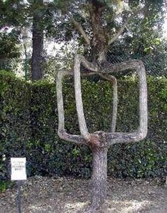 世界の奇妙な木13