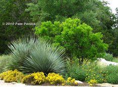 Designing with Native Plants Dimianita, Wheeler Sotol, Mountain Laurel